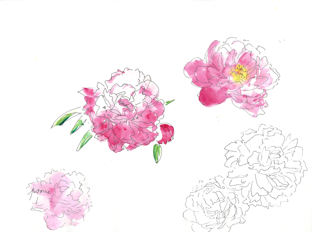 sophie_weidler_bauchez_illustration_packaging_bougies_sia_pivoine
